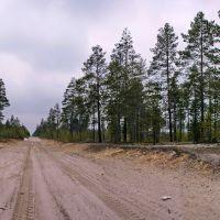 Рядом с домом. Сибирские направления. Siberian taiga., Муравленко