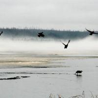 """Озеро """"Янтарное"""", Надым"""
