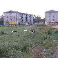 Местные жители, Гастелло