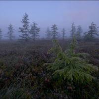 Туман в тундре, Ноглики