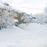 Зимний бархат, Северо-Курильск