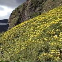 Local Flora, Северо-Курильск