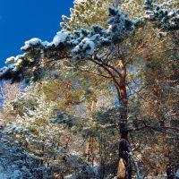 Зимний лес., Смирных