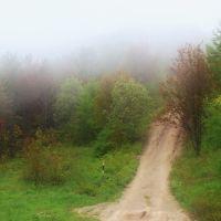 Туманный лес, Углегорск