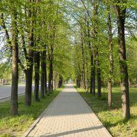В парке ОАО УЭХК, май 2011г., Новоуральск
