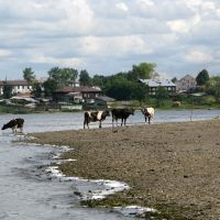пруд и коровы (the pond &  cow), Верхняя Синячиха