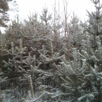 Зима, Верхняя Сысерть