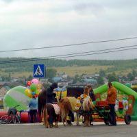Висим. День посёлка. Пони, ламы ездовые., Висим