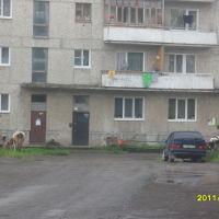 коровы в городе, Волчанск