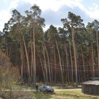 лес, Заводоуспенское