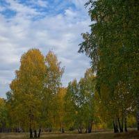 Березовый лес на правом берегу Каменки I, Каменск-Уральский