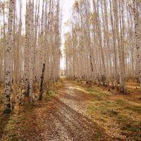 Осень в берёзовой роще, Красноуральск