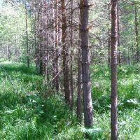 Лес, Нижние Серги