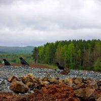 Любопытствующие птицы, Нижняя Тура
