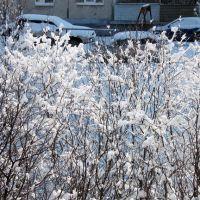 Первомайская пурга. Кусты и альпийские снега. Snowstorm on May 2, 2009. Alpine snow and bushes, Первоуральск