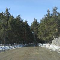 Дорога в лес, Сысерть