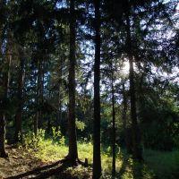 Лес, Тугулымский район, Тугулым