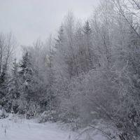Вид у села Ворга, Ворга