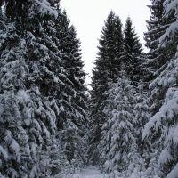 Зимний лес, Ворга