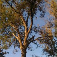 Tree, village Krasnyj, Красный