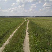поле, Починок