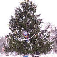 Новогодняя елка на центральной площади города..., Сафоново