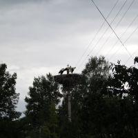 Khislavichi. Storks nest, Хиславичи