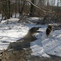 зимой река кохла, Шумячи