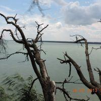 Старое дерево, Солнечнодольск