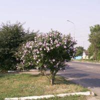 В г. Изобильном. фото Кудрявец Н.К. 2006 г., Изобильный