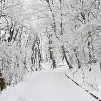 в парке, Железноводск