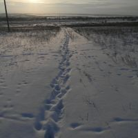 Окрестности с. Чернолесское, Арзгир