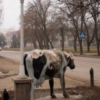 Коровка на улице Гагарина, Георгиевск