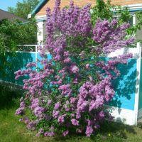 Весна в Красногвардейском, Красногвардейское