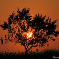 абрикоса на закате.Apricot on a sunset, Преградная