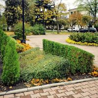 Thuja, a privet and marigolds, Ставрополь