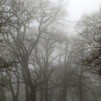 Fog., Ставрополь