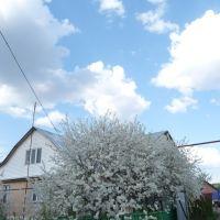 Весна в Гавриловке, Гавриловка Вторая