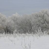 Зимние чертоги, Знаменка