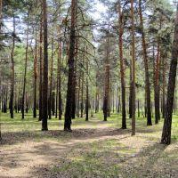 Старая лесная тропинка, Котовск
