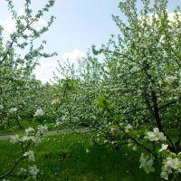 Цветущие сады, Мичуринск