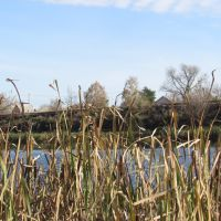 Reeds at the pond, Рассказово