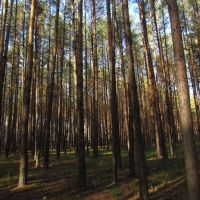Forest Density, Рассказово