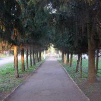 Аллея парка, Староюрьево