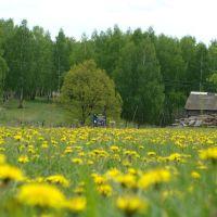Цветущая лужайка., Актюбинский