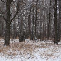 Лес в ноябре. Wood at November., Актюбинский