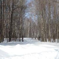 Зимний лес. The winter wood., Актюбинский