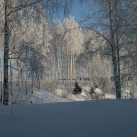forest, Арск