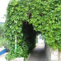 Покров из зелени, Бавлы