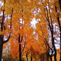 Деревья в Парке Победы осенью, Бавлы